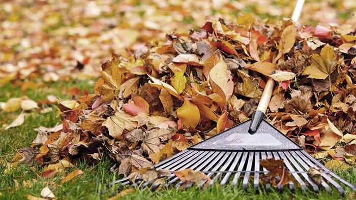 В Броварах можно бесплатно сдать листья